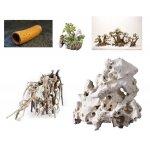 Süsswasseraquaristik